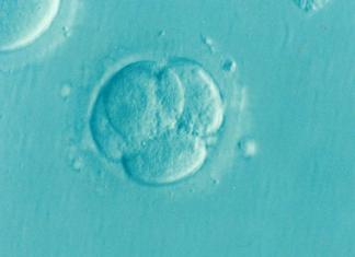 """Los embriones que se utilizarán son embriones antiguos del Programa de Fecundación """"in vitro"""" del Servicio de Medicina de la Reproducción de Dexeus Mujer."""