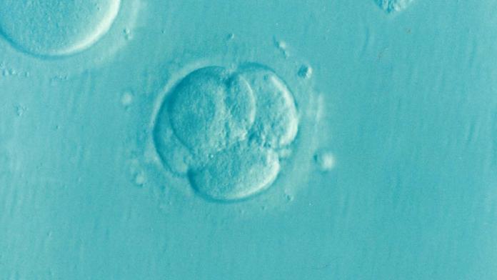 Los embriones que se utilizarán son embriones antiguos del Programa de Fecundación